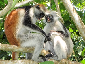 Wilde dieren op Zanzibar