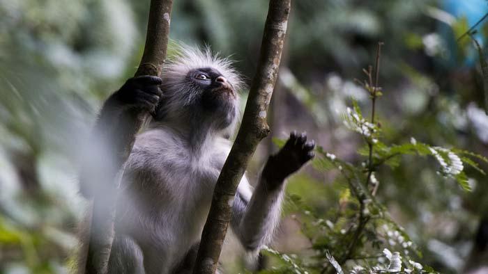 jozani forest zanzibar tanzania